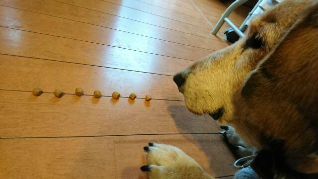 犬の腎臓病に伴う療法食ジプシー