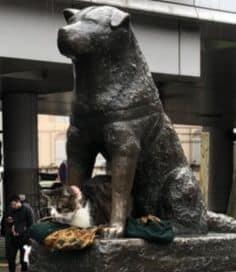 渋谷駅 ハチ公前 猫